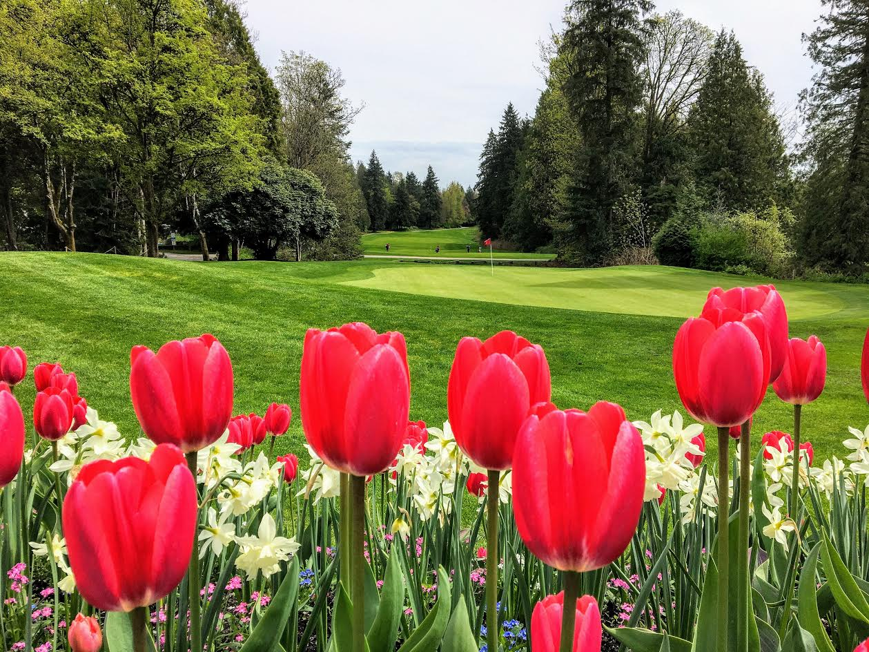 Tulips at Golf Course